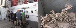 Abb 2: Links: Begeisterung am Großkastengreifer, in dem sich lebende Lophelia pertusa (rechts) befinden.