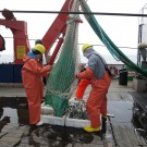 """Fischereibiologischer """"Hol"""" auf FS ALKOR. Foto: Sophia Wagner"""