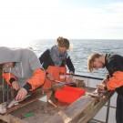 Untersuchung der gefangenen Fische. Foto: Anna Lena Kolze