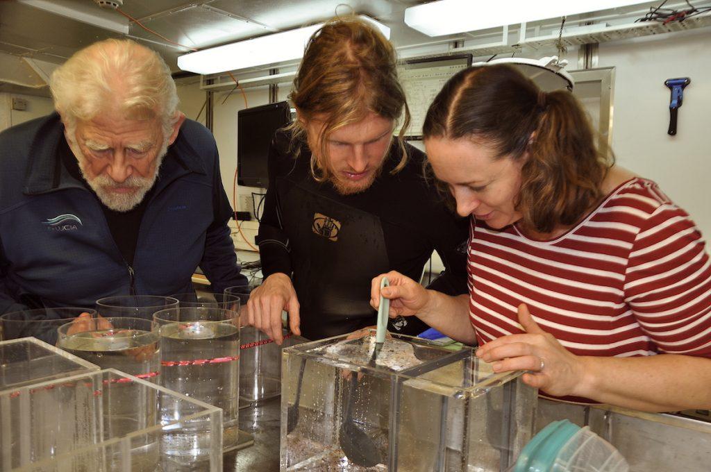 Im Labor werden die Hyperiiden Amphipoden untersucht / The Hyperiid amphipods are sampled in the lab. Photo: Karen Hissmann / JAGO-Team