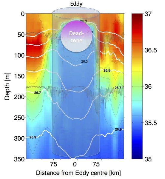 """Die Grafik zeigt einen Schnitt durch einen am CVOO beobachteten Wirbel (Eddy). Die unterschiedlichen Farben geben den Salzgehalt des Wassers an. Da das Wasser im Inneren des Wirbels von der afrikanischen Küste stammt, ist es deutlich weniger salzhaltig als das umgebende Ozeanwasser. Die Zone mit extrem geringem Sauerstoffgehalt (""""dead-zone"""") entwickelt sich im Zentrum des Eddys in etwa 20 bis 100 Metern Wassertiefe / his plot shows a salinity section of the upper 350 metres of sea water observed across an eddy passing through the Cape Verde Ocean Observatory mooring. As the water in the eddy originates from the African Coast it is much lower in salinity than the surrounding water. Graphic: J. Karstensen, GEOMAR"""