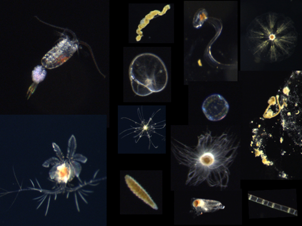 "Beispielbilder von Plankton und ""Marinem Schnee"". / Example images of various plankton and marine snow aggregates from the CPICS. Photo: HZG/Klas Ove Möller"