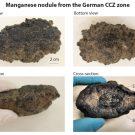 Manganknollen aus dem deutschen Lizenzgebiet in der CCZ. (Abb 1)