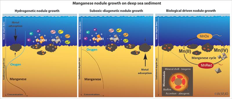 Manganese nodule growth on the deep-se-floor