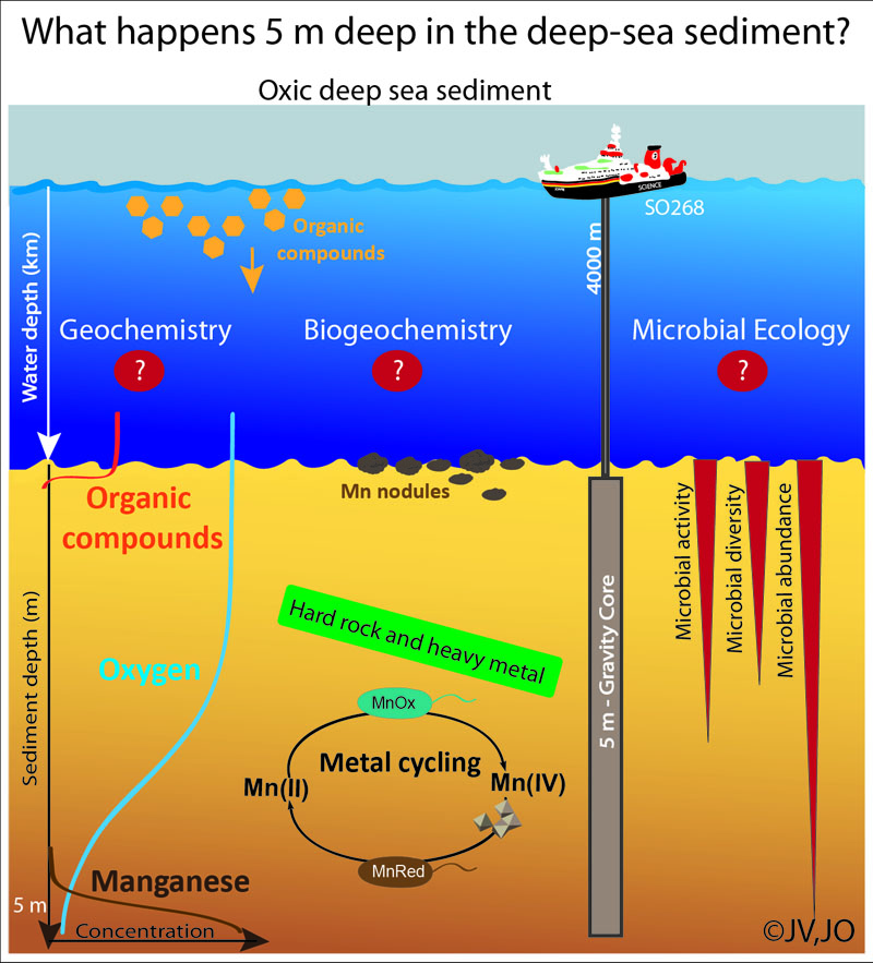 What happens 5 m deep in the deep-sea sediment? / Was passiert 5 m tief im Sediment der Tiefsee? Graphic: Jessica Volz, Julia Otte
