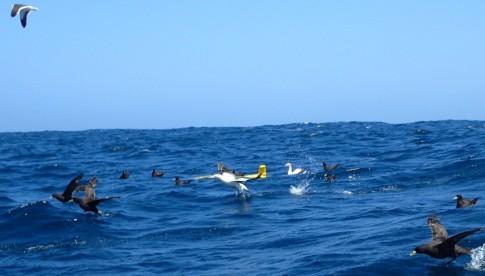 Einige Seevögel reiten auf dem Gleiter. [Photo by Patricia Handmann]