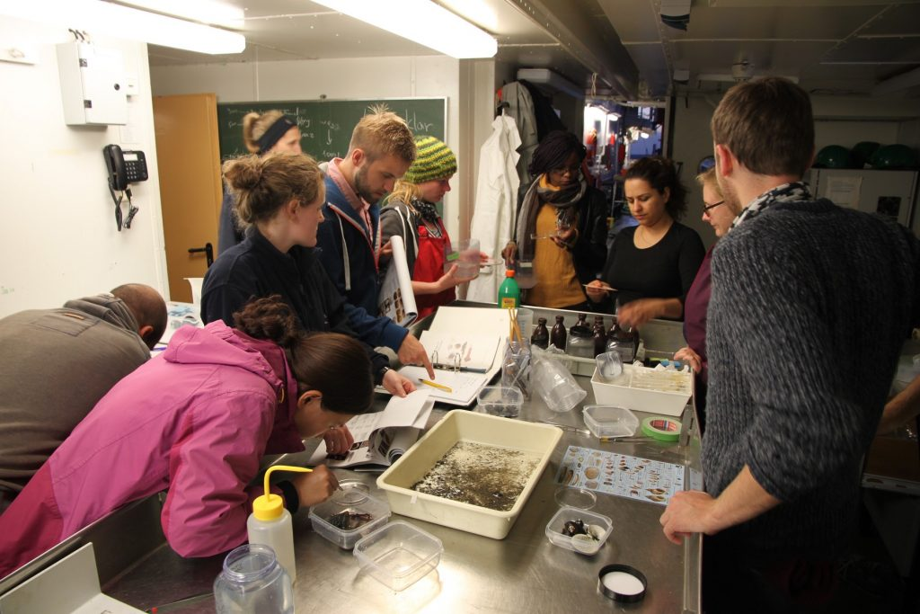 Identifying species caught with the dredge in the wet lab (Photo by Christian Pansch)