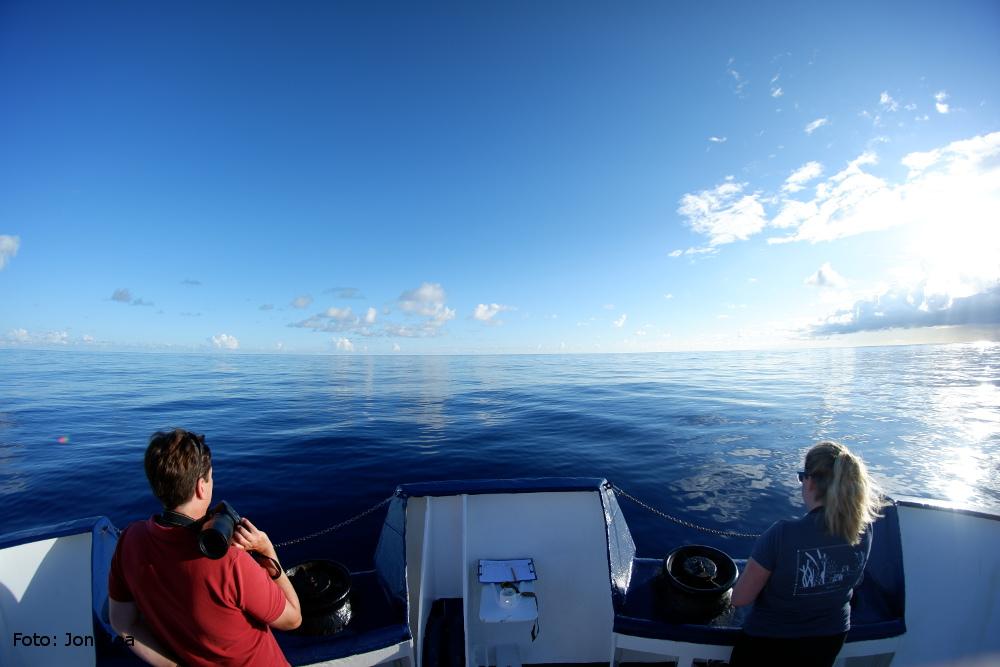 Jeweils 2 Personen beobachten gleichzeitig die Wasseroberfläche neben dem Bug des Schiffes. Nicht immer ist die See dabei so ruhig wie auf diesem Bild. Foto: Jon Roa