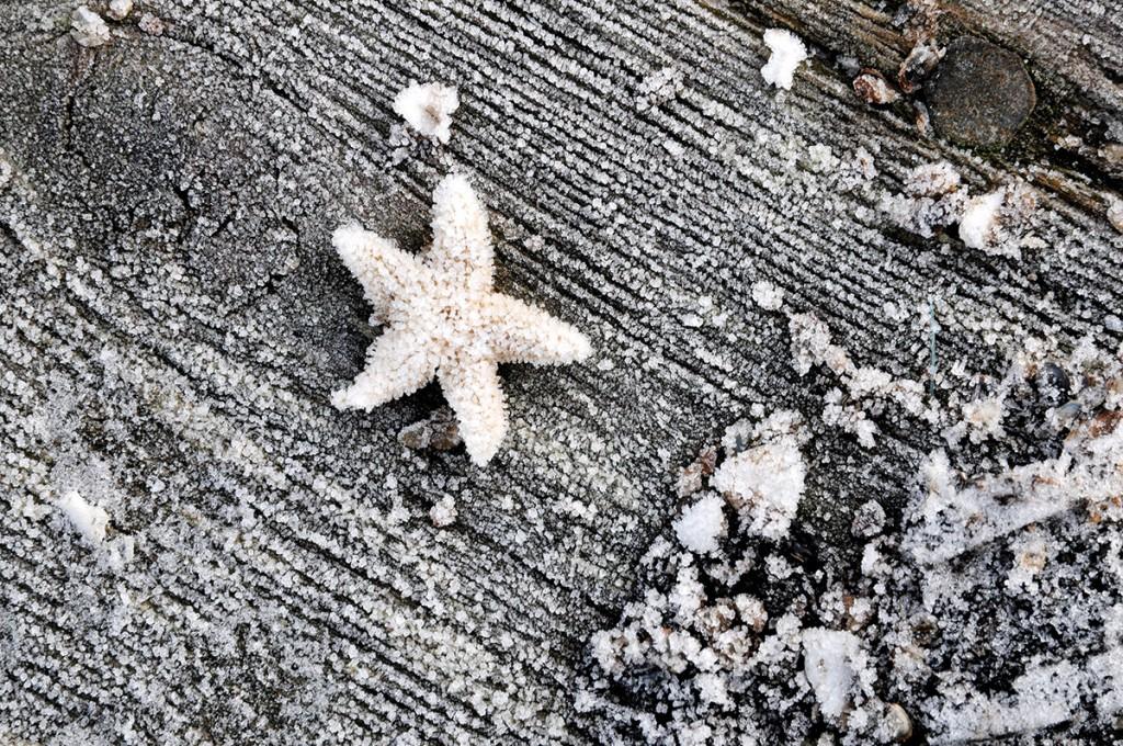 Ein frohes Weihnachtsfest und einen guten Start in's neue Jahr wünschen wir euch! Dieses tolle Foto ist während des KOSMOS-Experiments im Gullmar Fjord, Schweden, entstanden. (Foto: Maike Nicolai, GEOMAR)