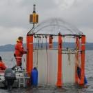 Beim KOSMOS-Experiement 2013 im Gullmar Fjord in Schweden wurden tagtäglich Wasserproben genommen. (Foto: Maike Nicolai, GEOMAR)