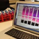 Sind die Bakterien aktiv, verbrauchen sie auch viel Sauerstoff, demnach sinkt die Sauerstoffkonzentration im Reagenzglas und die Indikatorlösung färbt sich pink. Ist das Wasser farblos, ist gar kein Sauerstoff mehr vorhanden. Lea konnte bei ihrem Versuch beobachten, dass im mit Mikroplastik versetzten Sediment deutlich weniger Sauerstoff verbraucht wurde. Foto: B. König, GEOMAR // Computerbild: S. Dengg, GEOMAR