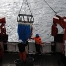 Zwei Mitglieder der Crew holen die Dredge an Bord. Foto: G. Seidel, GEOMAR
