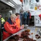 Heidi Gonschior erklärt den Teilnehmern, wie ein Seestern eine Miesmuschel frisst: Er zieht die Muschelhälften so lange auseinander, bis sich eine kleine Öffnung ergibt. Dann stülpt der Seestern seinen Magen durch seinen Mund (in der Mitte der Unterseite) nach Außen über die Öffnung und fängt an, das Muschelinnere zu verdauen, bis nur noch die Schale übrig ist.  Foto: G. Seidel, GEOMAR