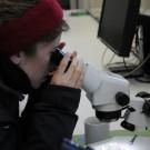Sonja Geilert schaut sich Zooplankton unter einem Binokular an. Foto: G. Seidel, GEOMAR