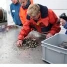 Heidi Gonschior weiß genau, was sie in den Proben aus dem Bodengreifer findet. Foto: G. Seidel, GEOMAR