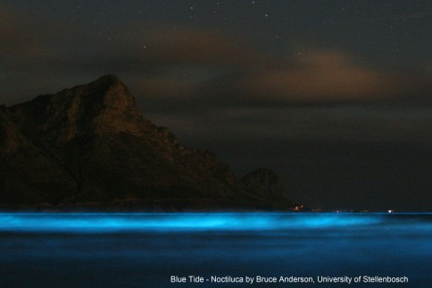 """""""Blue Tide- Noctiluca"""" by Bruce Anderson (University of Stellenbosch). - BMC Ecology image competition: the winning images. BMC Ecology 2013, 13:6 doi:10.1186/1472-6785-13-6. Licensed under CC BY 2.0 via Wikimedia Commons - https://commons.wikimedia.org/wiki/File:Blue_Tide-_Noctiluca.jpeg#/media/File:Blue_Tide-_Noctiluca.jpeg"""