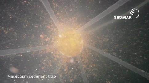 Sedimentfalle am unteren Ende eines Meskosmos mit Partikeln. Screenshot aus einem Film von Tim Boxhammer, GEOMAR