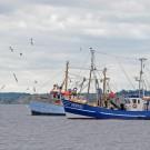 Fischkutter auf der Ostsee. Eine neue Studie zeigt, dass die globalen Fischfangmengen in den 1990er Jahren bisher unterschätzt wurden. Foto: J. Steffen, GEOMAR