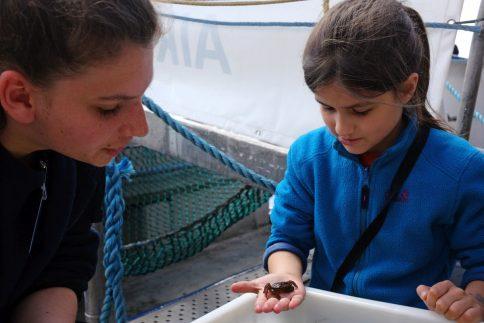 Was lebt den da im Meer?! Vor allem kleine Gäste sind fasziniert von den marinen Organismen. Foto: Jan Steffen