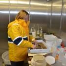 Waschen der Probe im Kühlraum bei 4 °C / Sieving samples in the 4 °C cooling room. ©Thomas Walter