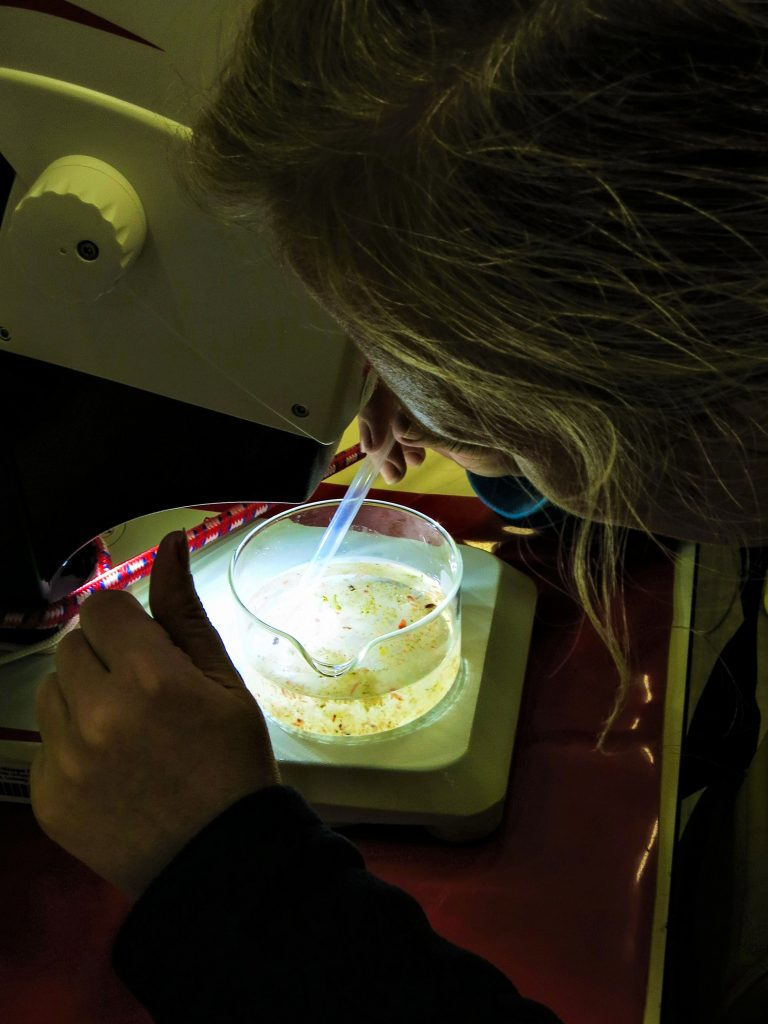 Scientist examines the samples obtained with the Multinet under a microscope. Photo: Jessica Volz, Editing: Steffen Niemann