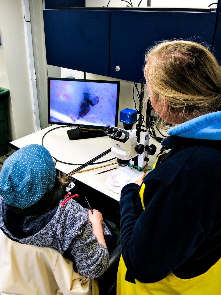 A microscope-mounted camera allows the scientists to take high-resolution photographs of the water samples and their contained fauna and flora. Photo: Jessica Volz, Editing: Steffen Niemann