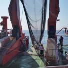 Deep-sea trawl with RV SONNE. Photo: Leesa Naidoo.